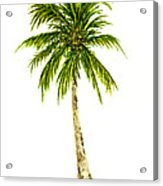 Palm Tree Number 4 Acrylic Print