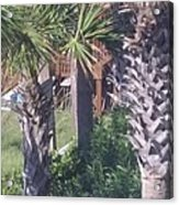 Palm Tree Scenery Acrylic Print