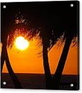 Palm Tree Silhouette At Sunset Acrylic Print