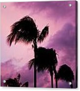 Palm Tree Silhouettes At Dusk In Aruba Acrylic Print