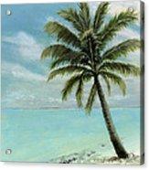 Palm Tree Study Acrylic Print by Cecilia Brendel