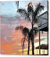 Palm Tree Sunrise  In New England Acrylic Print