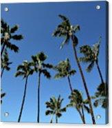 Palm Trees Against A Clear Blue Sky Acrylic Print