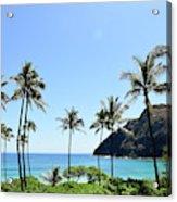 Palm Trees Along The Coast Of Waimanalo Acrylic Print