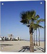 Palm Trees At Long Beach California Acrylic Print