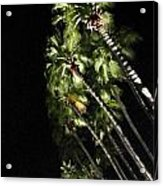 Palm Trees At Night Acrylic Print