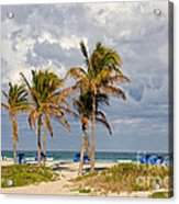 Palm Trees At The Beach Acrylic Print
