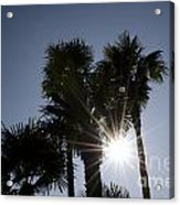 Palm Trees In Backlit Acrylic Print