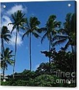 Palm Trees In Hawaii Acrylic Print