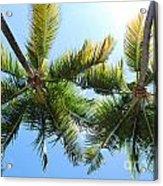 Palm Trees In Puerto Rico Acrylic Print