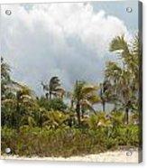Palm Trees In Sunlight Acrylic Print
