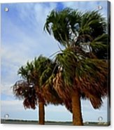 Palm Trees In The Wind Acrylic Print