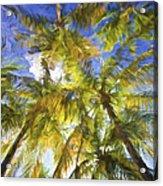 Palm Trees Of Aruba Acrylic Print
