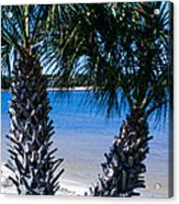 Palm Trees Of Gulf Breeze Acrylic Print
