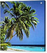 Palm Trees On Little Palm Island Filtered Acrylic Print