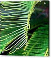 Palme Cycas Acrylic Print