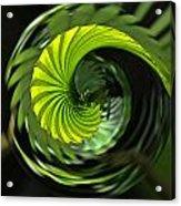 Palmetto Nautilus Acrylic Print