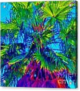 Palmetto Number 3 Acrylic Print