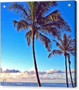 Palms 438 Acrylic Print