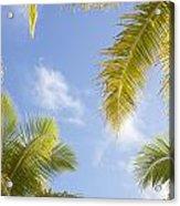 Palms And Sky Acrylic Print