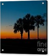 Palms At Clear Dawn Acrylic Print