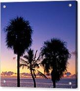 Palms At Sunrise Acrylic Print