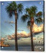Palms At The Pier Acrylic Print