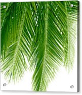 Palms Green Acrylic Print by Boon Mee