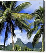 Palms In Morrea Acrylic Print