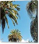 Palms In The Sky Acrylic Print