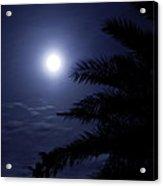 Palms Of The Night Acrylic Print