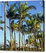 Palms On Hawaii Beach Trail Acrylic Print