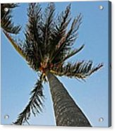Palms Over My Head Acrylic Print