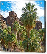 Palms Stand Tall In Andreas Canyon In Indian Canyons-ca Acrylic Print