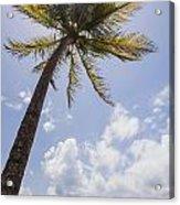 Palms Trees Along Luquillo Beach In Puerto Rico Acrylic Print