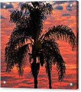 Palmtree Apocalypse Acrylic Print