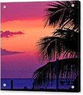 Palmtree At Sunset Acrylic Print