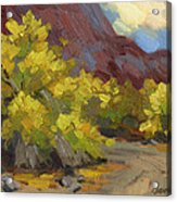 Palo Verde Trees Acrylic Print
