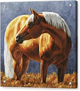 Palomino Horse - Gold Horse Meadow Acrylic Print by Crista Forest