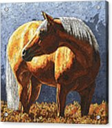 Palomino Horse - Variation Acrylic Print by Crista Forest