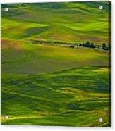 Palouse Greens Acrylic Print