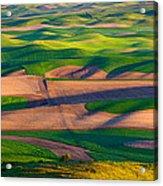 Palouse Ocean Of Wheat Acrylic Print