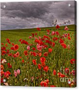Palouse Poppies Acrylic Print