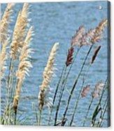 Pampas On The Lake Acrylic Print