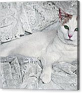 Pampered Pet Acrylic Print