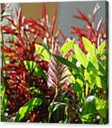 Pam's Garden 10827 Acrylic Print