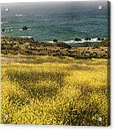 Panarama Spring On Califronia Coast By Denise Dube Acrylic Print