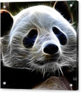 Panda - 4934 - F Acrylic Print