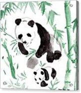 Panda Family Acrylic Print