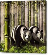 Pandas In A Bamboo Forest Acrylic Print